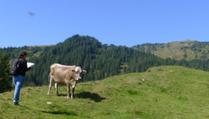 Glaubenberg Kartenlesen Frau Kuh