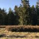 Moorlandschaft Finsterwald