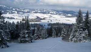 Schafberg Finsterwald